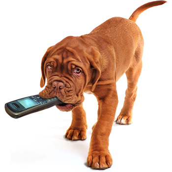 Dog holding cellphone